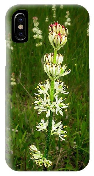 sticky false asphodel - Tofieldia glutinosa - 10JL01 Phone Case by Robert G Mears