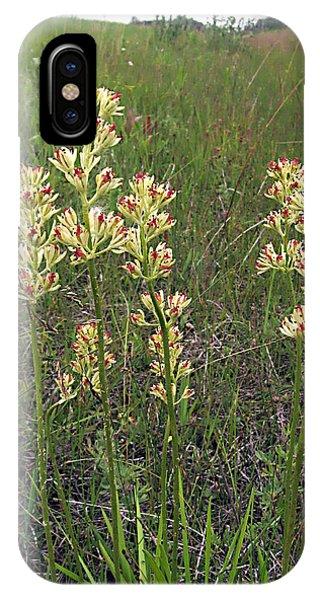 sticky false asphodel - Tofieldia glutinosa - 11JL15-1 Phone Case by Robert G Mears