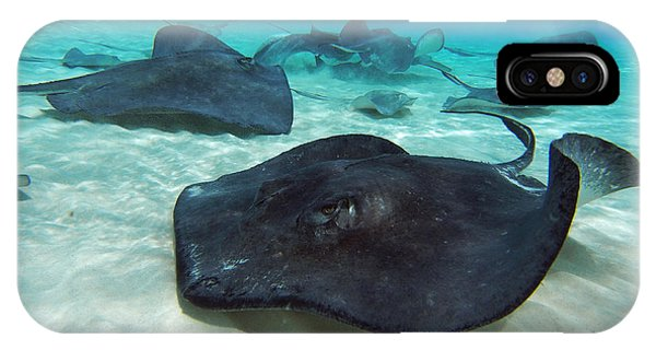 Bahamas iPhone Case - Stingrays by Carey Chen