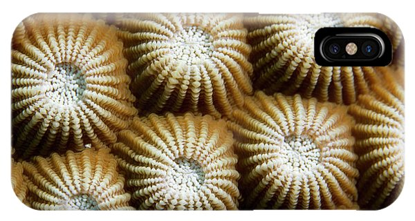 Barrier Reef iPhone Case - Stone Coral by Michael Szoenyi/science Photo Library
