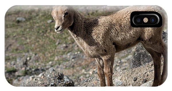 Rocky Mountain Bighorn Sheep iPhone Case - Stone Lamb by Kathleen Bishop
