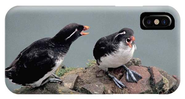 Auklets iPhone Case - Stop Whining by F Hughes