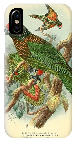 Parakeet iPhone Case - Streaked Lory by Dreyer Wildlife Print Collections