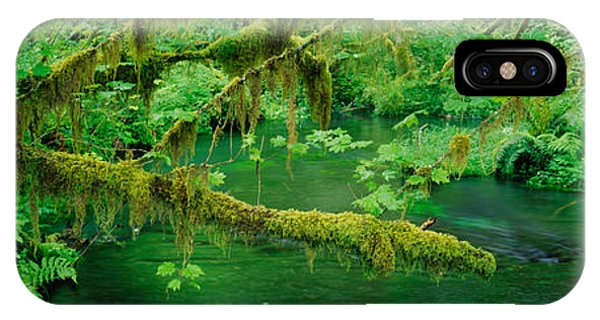 Olympic National Park iPhone Case - Stream Flowing Through A Rainforest by Panoramic Images