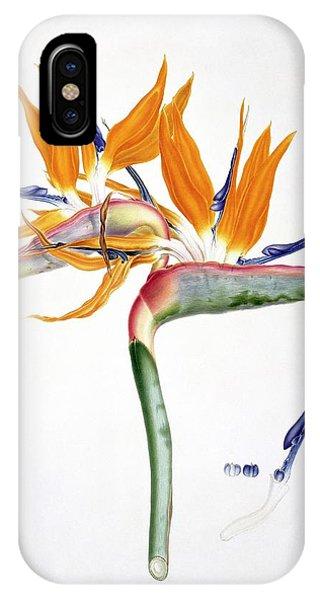 Monocotyledon iPhone Case - Strelitzia Reginae Flowers by Natural History Museum, London