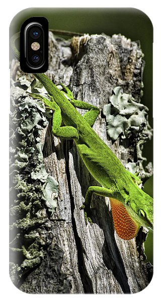 Stressed Anole IPhone Case