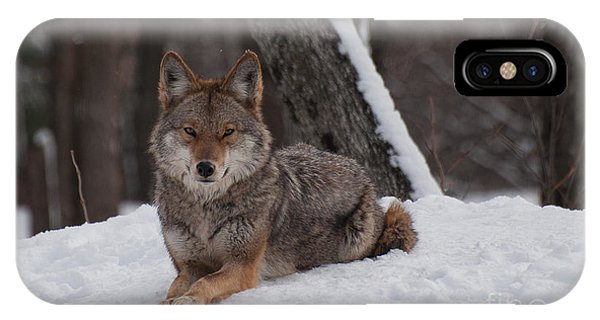 Striking The Pose IPhone Case