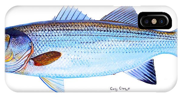 Trout iPhone Case - Striped Bass by Carey Chen