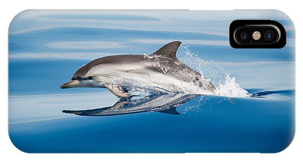 Dolphin iPhone Case - Striped Dolphin by Mirko Ugo