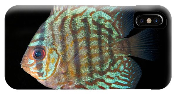 Striped Turquoise Discus Phone Case by Nigel Downer