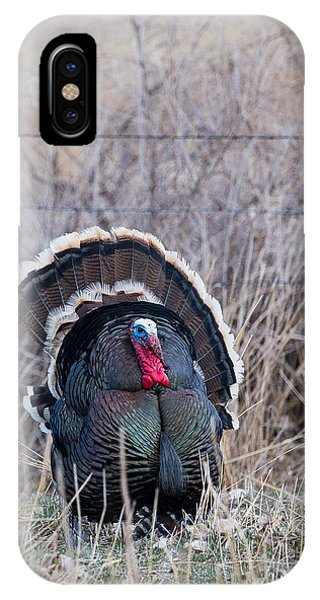Strutting Turkey IPhone Case