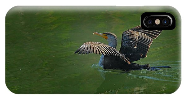 Strutting Cormorant IPhone Case