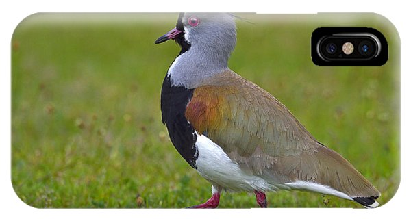Strutting Lapwing IPhone Case