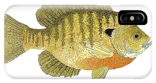 Study Of A Bluegill Sunfish IPhone Case