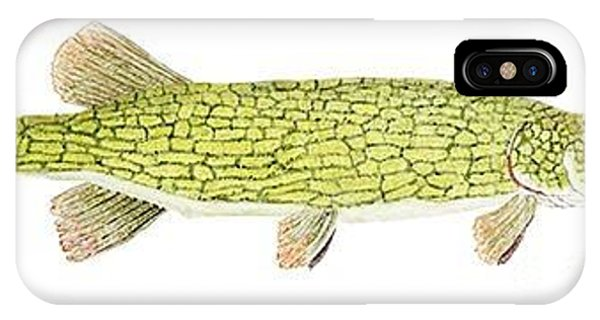 Study Of A Chain Pickerel IPhone Case