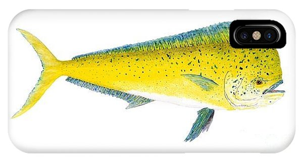 Study Of A Mahi Mahi IPhone Case