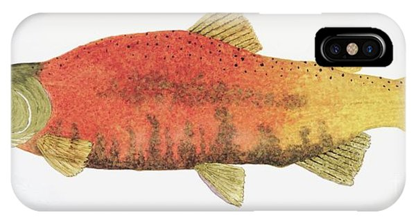 Study Of A Male Kokanee Salmon In Spawning Brilliance IPhone Case