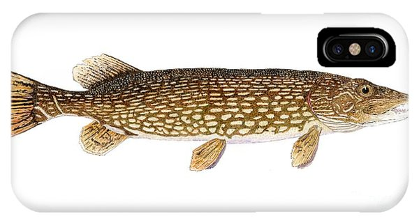 Study Of A Northern Pike IPhone Case