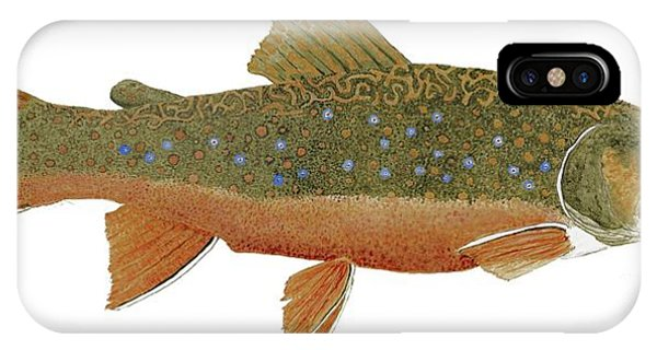 Study Of An Wild Eastern Brook Trout  IPhone Case