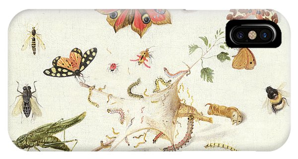 Cricket iPhone Case - Study Of Insects And Flowers by Ferdinand van Kessel