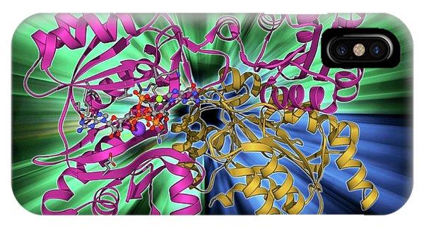 Succinyl-coa Synthetase Enzyme IPhone Case