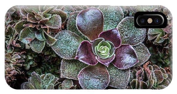Succulent iPhone Case - Succulent Art by Dale Kincaid