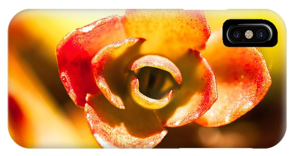 Succulent Eye IPhone Case