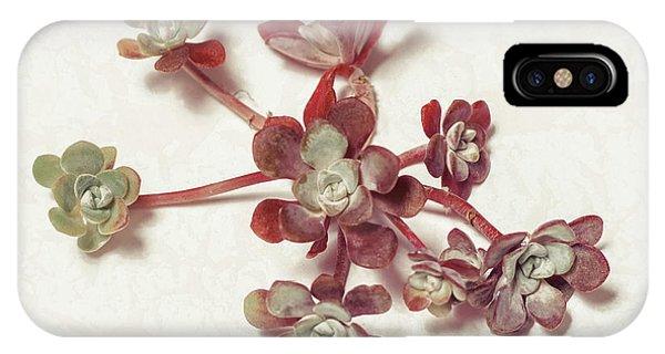 Succulent iPhone Case - Succulent Plant 1 by Lucid Mood