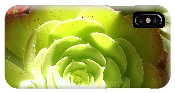 Succulent Sunshine Phone Case by Bill Mohler