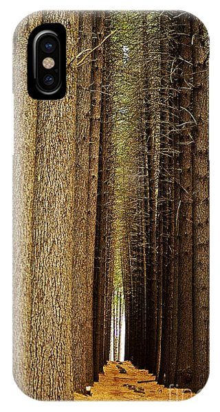 Sugar Pine Walk IPhone Case