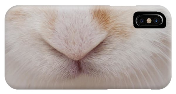 sugar the easter bunny 1 -A curious and cute white rabbit close up IPhone Case