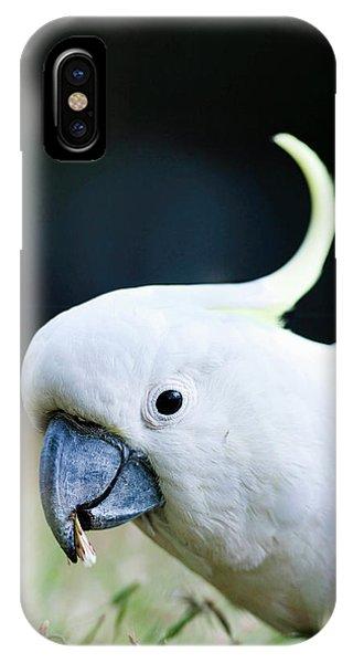 Sulfur-crested Cockatoo (cacatua IPhone Case