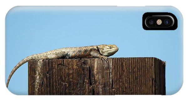 Sulky Lizard IPhone Case
