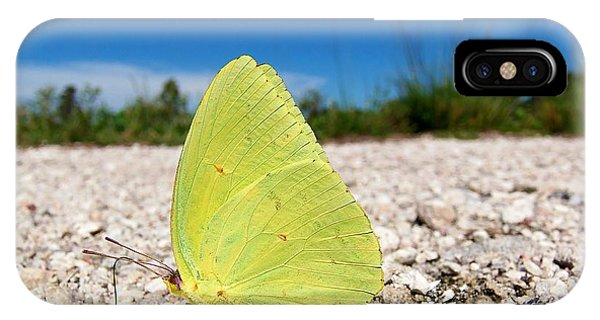 Sulphur Yellow Butterfly Phone Case by Chris Mercer