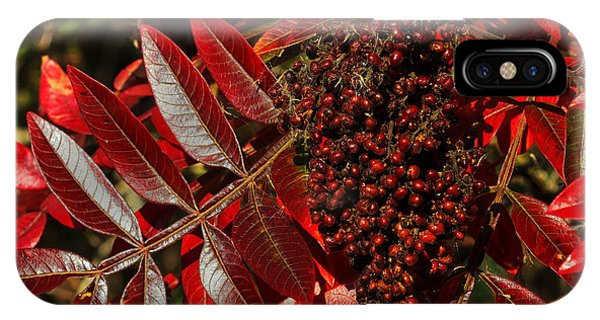 Sumac At Prime Hook IPhone Case