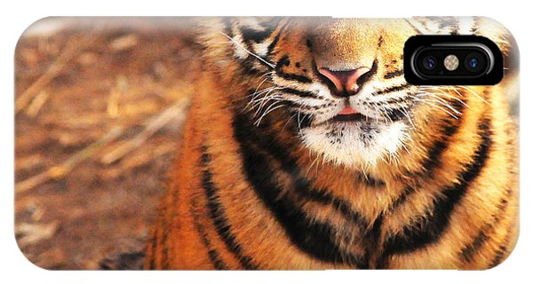 Sumatran Tiger Cub IPhone Case