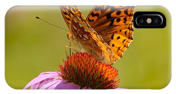 Summer Colors Butterfly IPhone Case