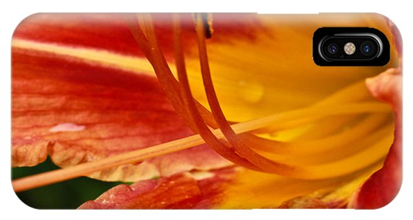 Summer Daylily IPhone Case