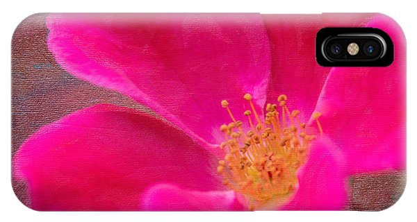 Summer Delight My Pink Rose IPhone Case