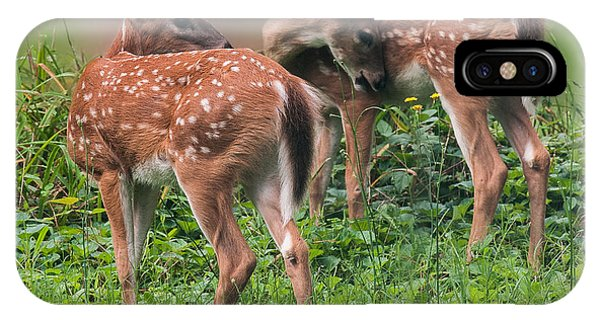 White Tailed Deer iPhone Case - Summer Fawns by Lara Ellis