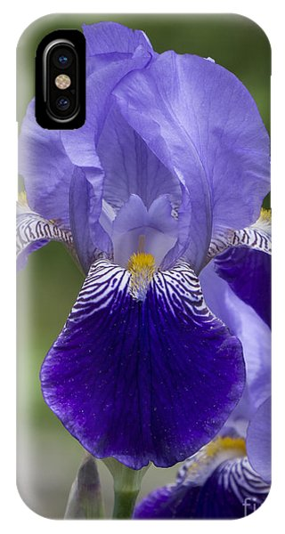 Summer Iris IPhone Case