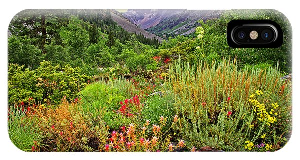 Summer Wildflowers In Lundy Canyon IPhone Case