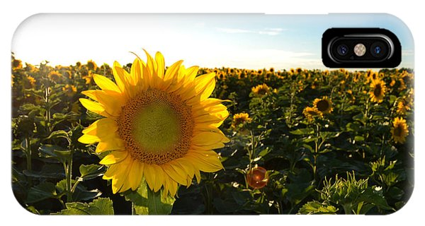 Sun And Sunflower 2  IPhone Case