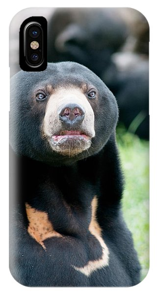 Sun Bear IPhone Case