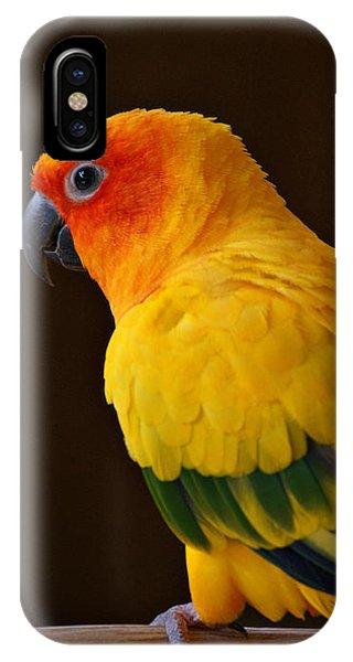 Sun Conure Parrot IPhone Case