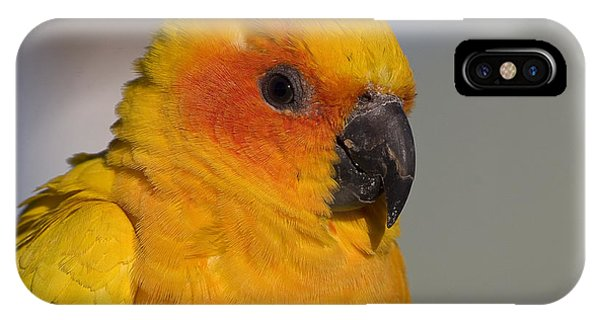 Sun Conure IPhone Case
