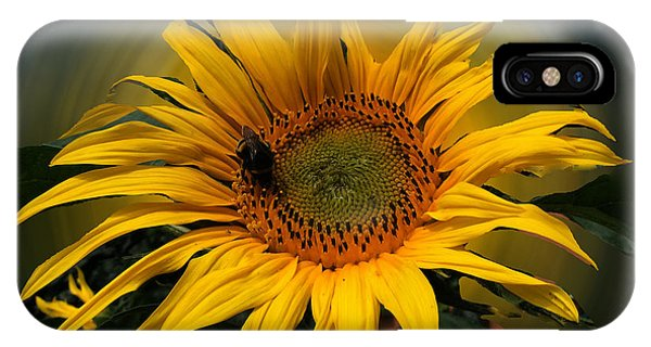 IPhone Case featuring the photograph Sun Flower Summer 2014 by Colette V Hera  Guggenheim