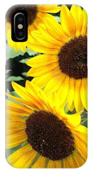 Sun Flowers IPhone Case
