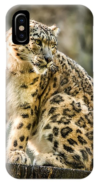 Sun Leopard Portrait IPhone Case
