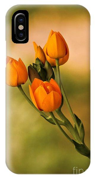Sun Star Flower IPhone Case